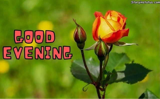 good evening flower photo