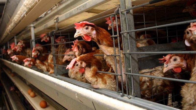 «Καμπανάκι» της Περιφέρειας Αν. Μακεδονίας - Θράκης για τη γρίπη των πτηνών
