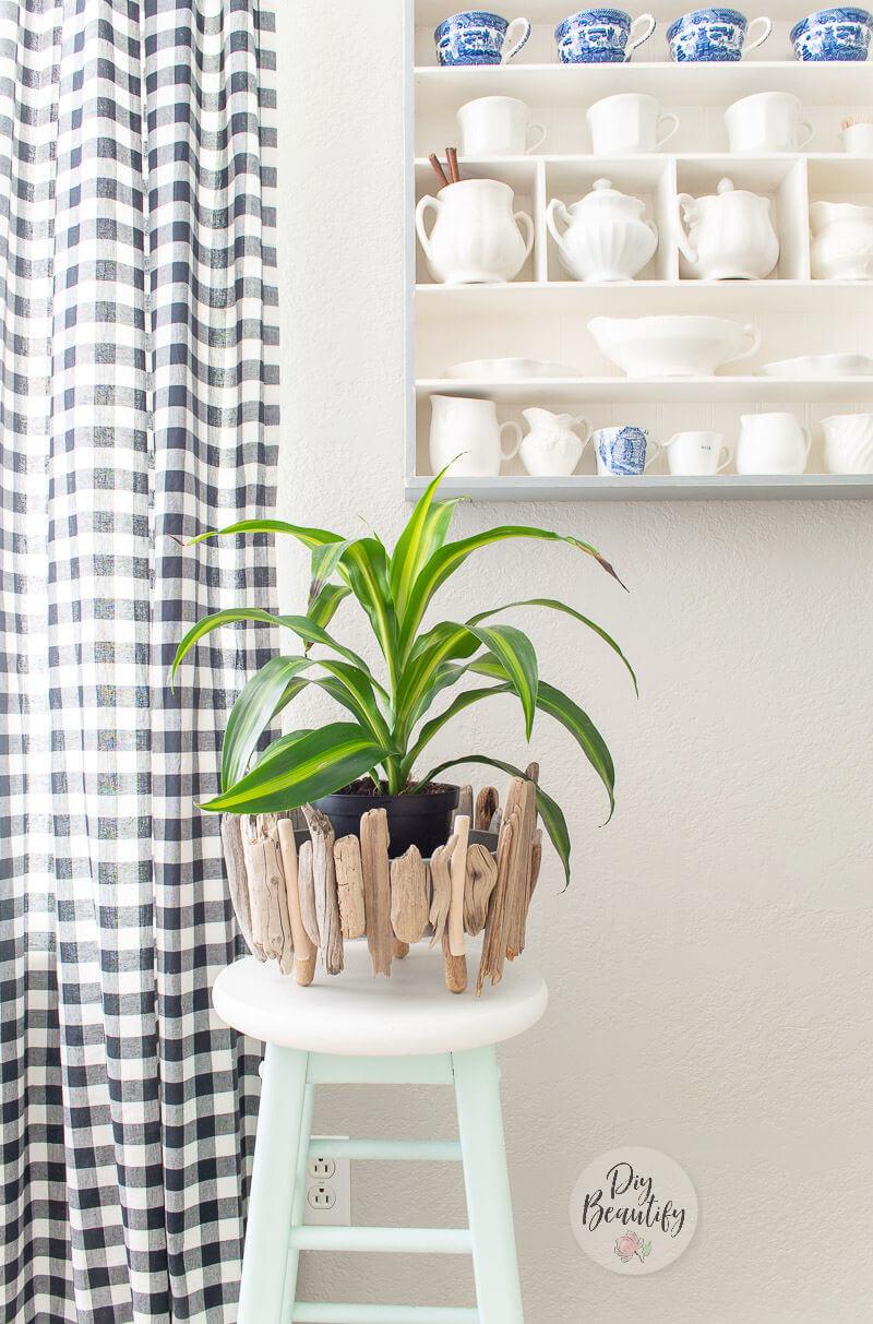 driftwood planter with dracaena plant