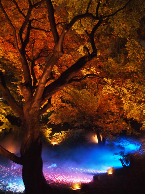 Fall Evening Illumination at Rikugien Gardens, Tokyo