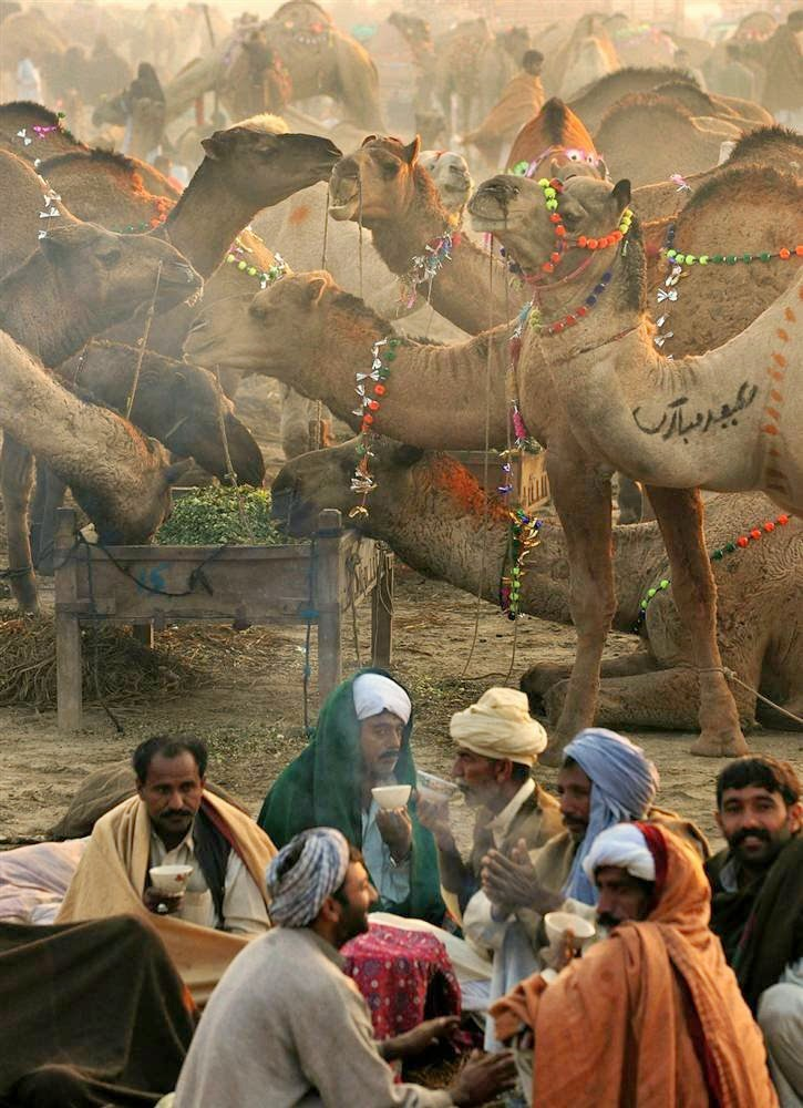 10 Best Backpacking Destinations in India | Pushkar Camel Fair