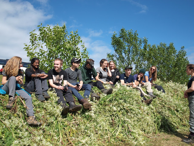 Volunteering in Iceland. Where to apply?