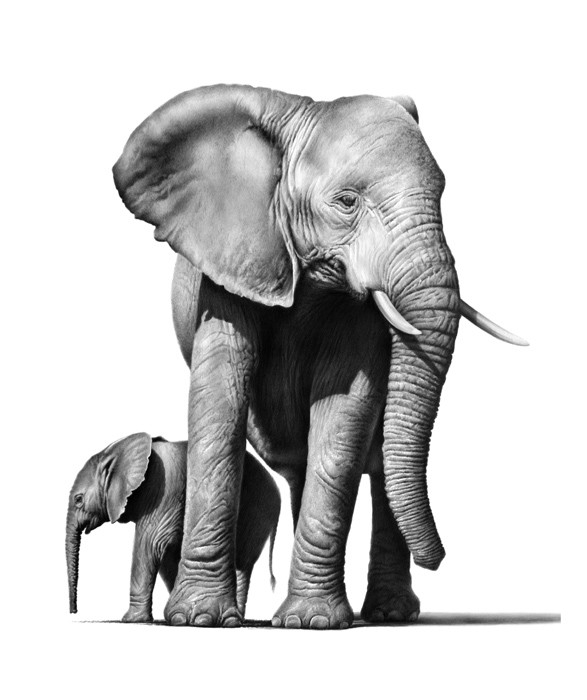 02-Mother-and-baby-Elephant-Richard-Symonds-Wildlife-Fine-Art-Drawings-a-Painting-and-a-Video-www-designstack-co