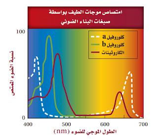 حل اسئلة الفصل الخامس ( الطاقة الخلوية )