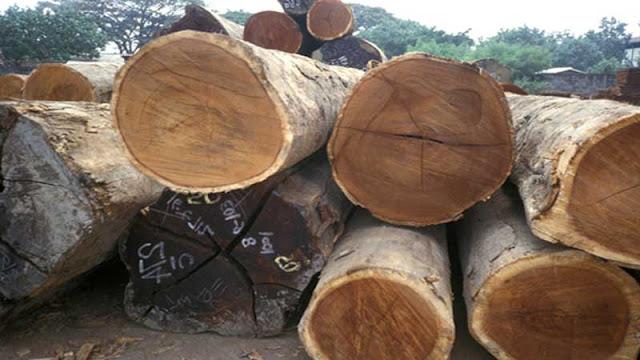 Mengenal karakteristik kayu besi Papua