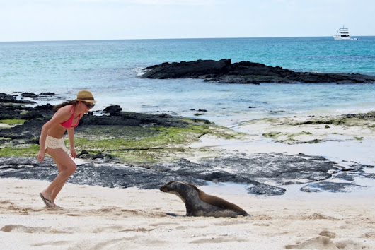 Playing With Sea Lions in the Galapagos Islands