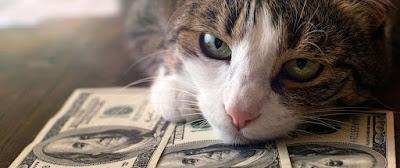 5 consejos para cuidar a tu gato a un menor costo