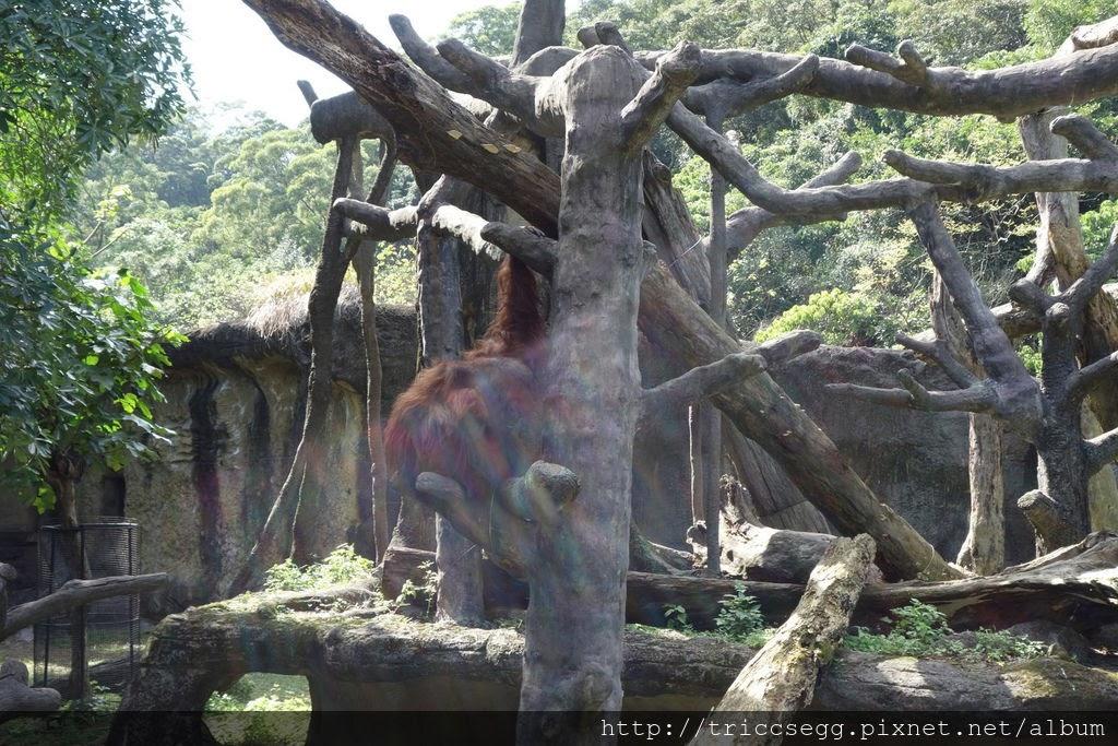 台北動物園(47).jpg