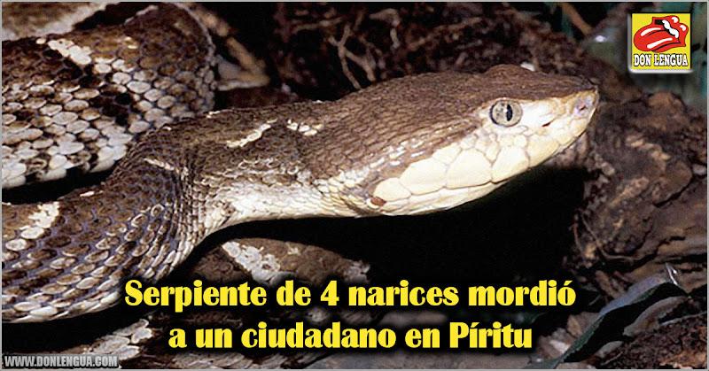 Serpiente de 4 narices mordió a un ciudadano en Píritu