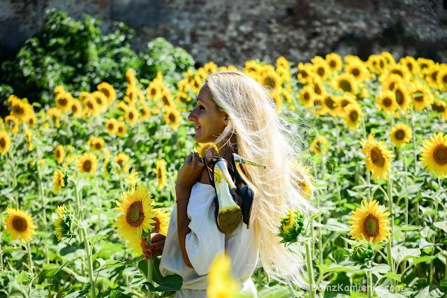 pole słoneczników Mugello