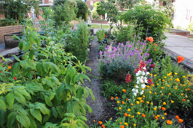 View of the veg garden and it's self sown wildflowers