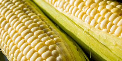 Milpa cocina mexicana maíz