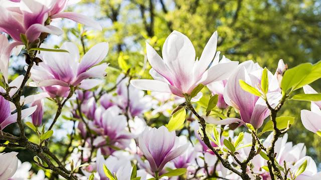 printemps produits inspiration sorties paysage renouveau