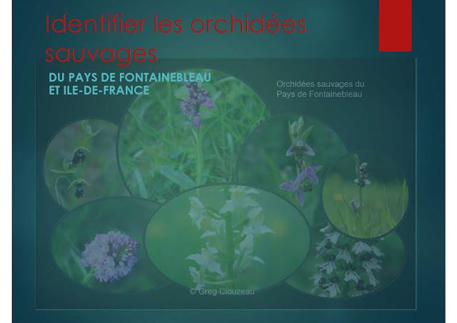 Couverture du Guide Identifier les orchidées sauvages d'Ile-de-France