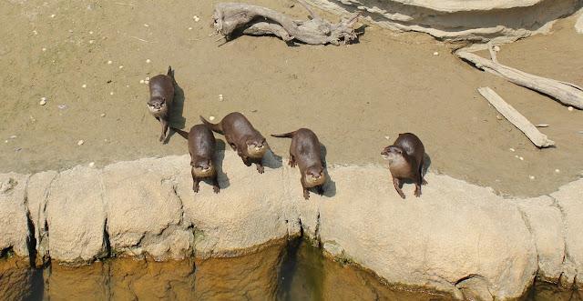 IMG 4103 - Wildlands Adventure Zoo Emmen