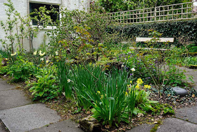 stumpery in early May