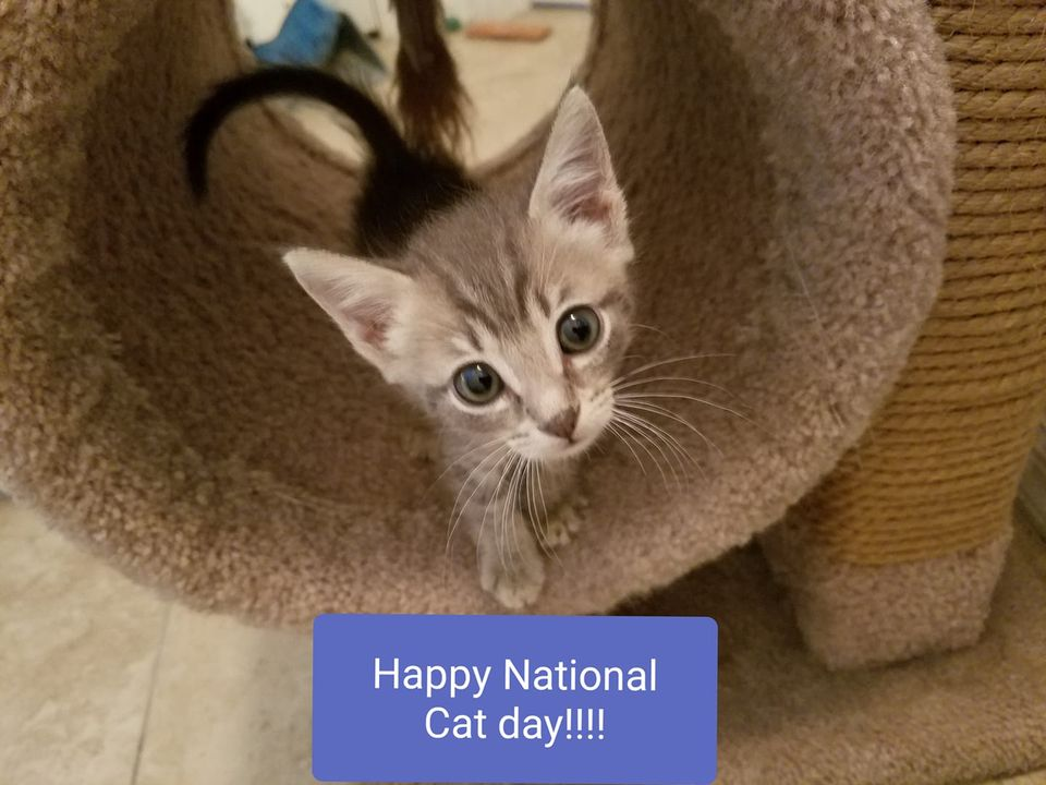 National Cat Day Wishes for Instagram