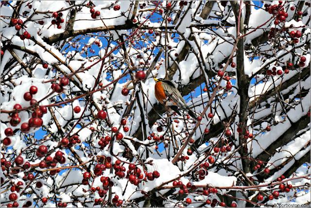 Paisajes de Invierno en Boston