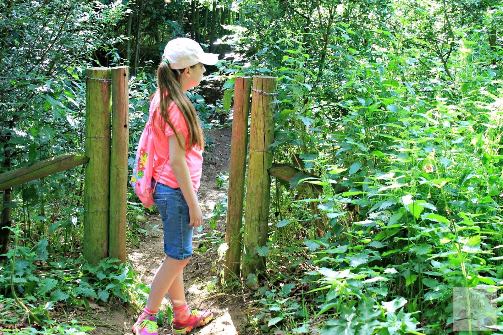 The Mini Mes and Me woodland walk looking for wildlife