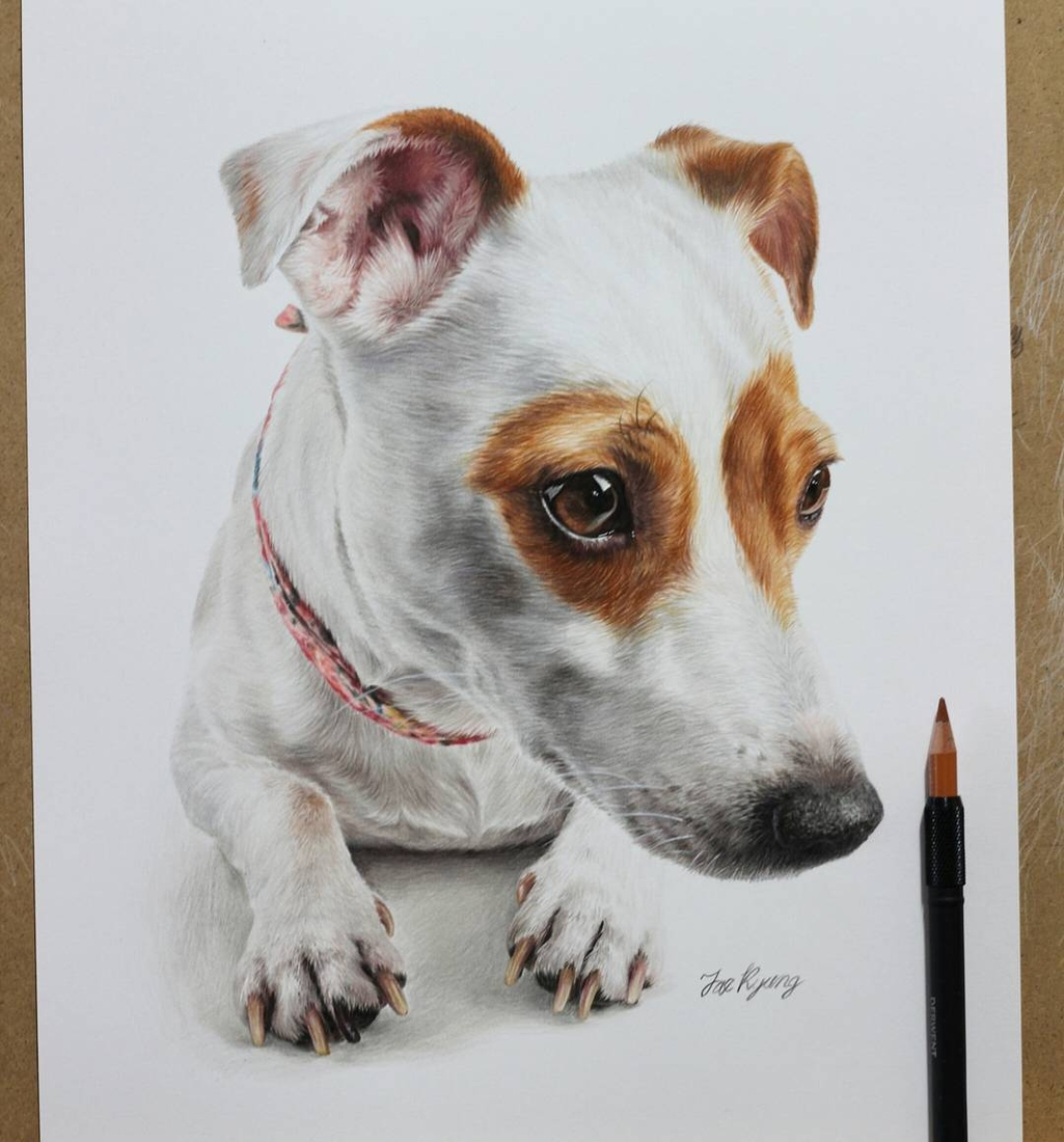12-Jack-Russell-Jae-Kyung-Cute-Kittens-and-Puppies-Drawings-www-designstack-co