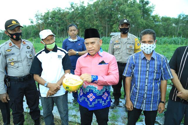 Ikut Petik Cabai dan Melon' Bupati HSU H Abdul Wahid Ajak Pemuda Terjun ke Sektor Pertanian