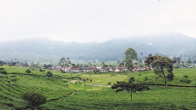 foto pemandangan kebun teh keren di jawa barat