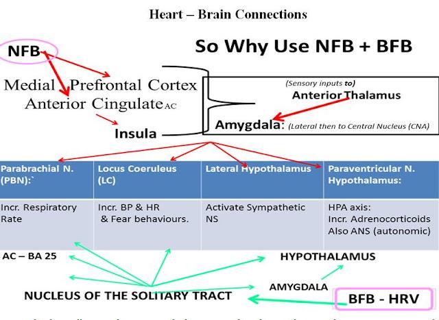 Neurofeedback: Der Blog über Neurofeedbacktherapie