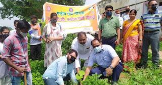 वन महोत्सव अभियान में एनसीसी कैडेटों द्वारा हुआ पौधरोपण   #NayaSaberaNetwork