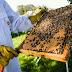 قـــصـــتـــي مع علاج النحل من مرض تعفن الحضنة الاوربي
