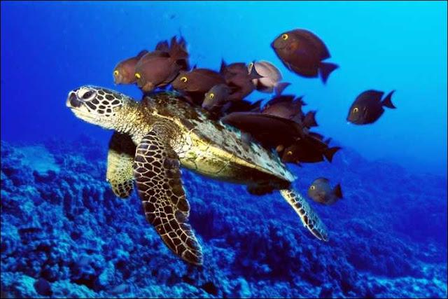Bunaken national park, dives spot