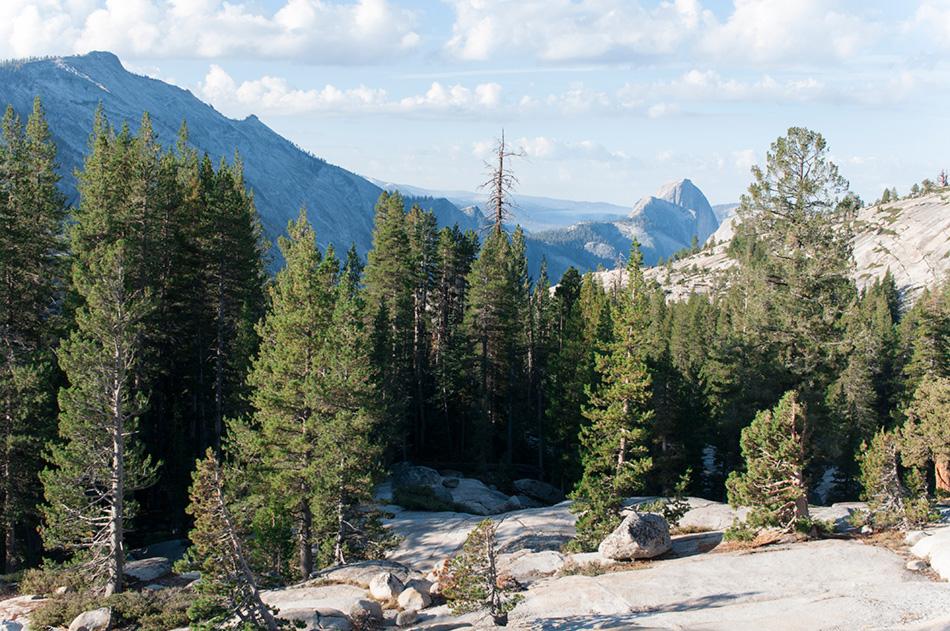 szlaki | niedźwiedzie w Yosemite | co zobaczyć | praktyczny przewodnik
