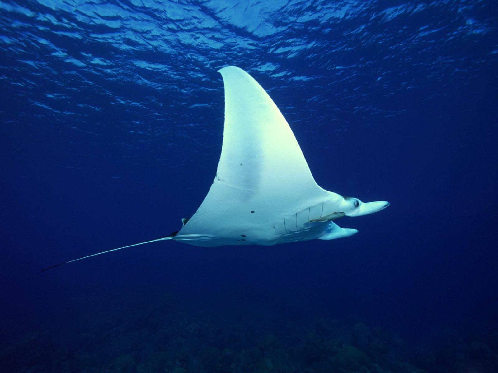 Free Cool Wallpapers: underwater hd
