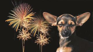 Cachorros e fogos