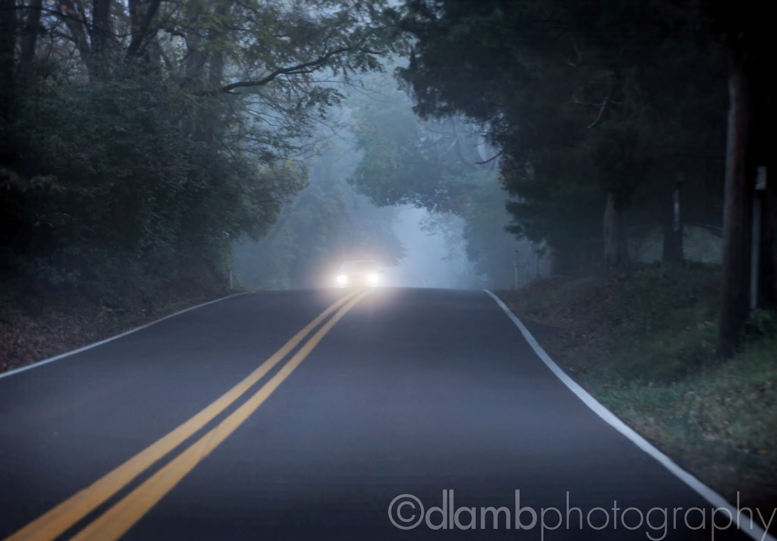 http://david-lamb.artistwebsites.com/featured/foggy-morning-drive-david-lamb.html