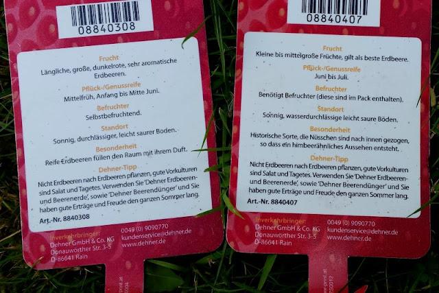 Erdbeerbeet anlegen: Erdbeer-Sorten und Schilder fürs Beet