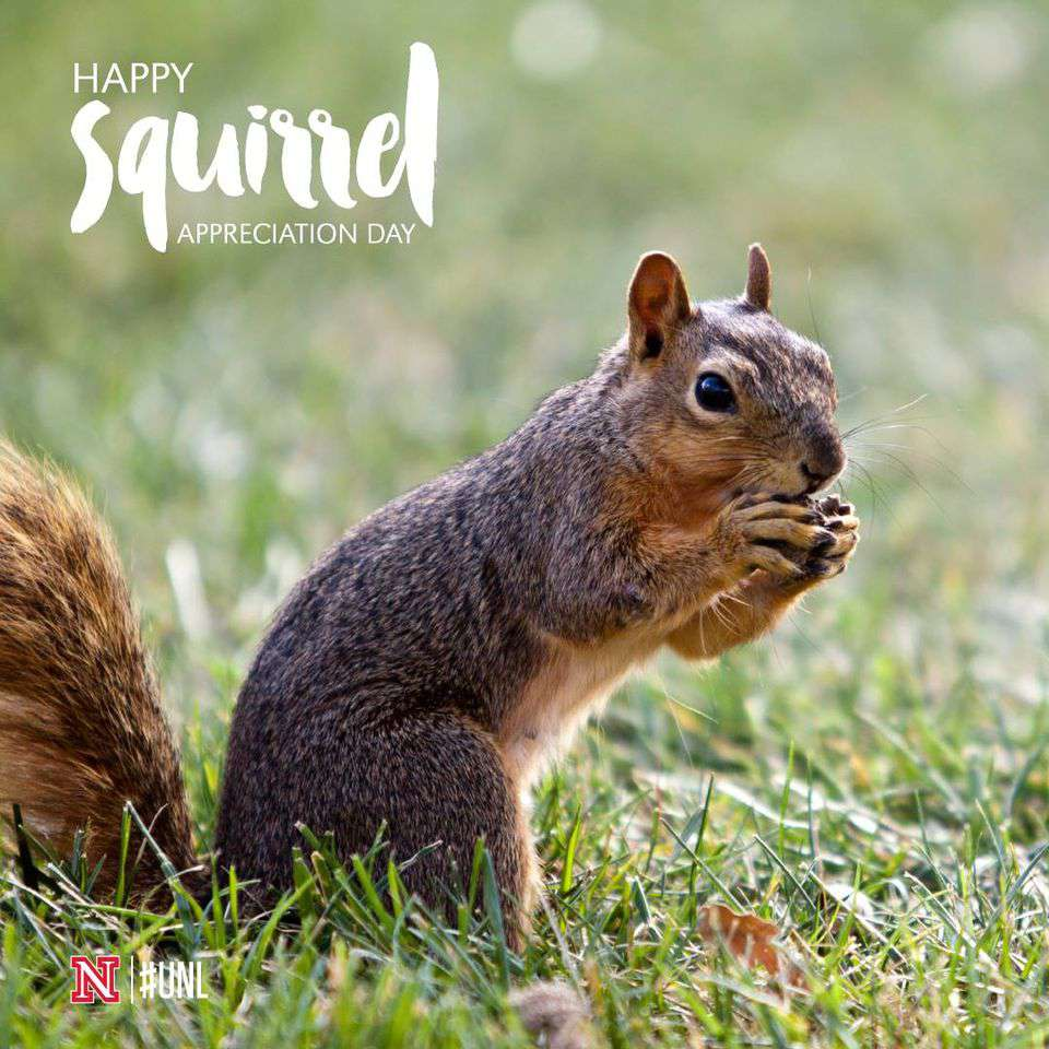 National Squirrel Appreciation Day Wishes Images download