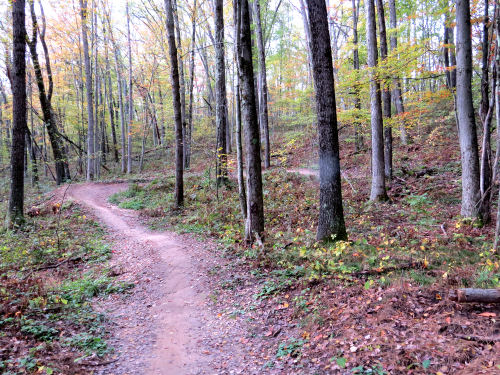 twisting mountain bike trail
