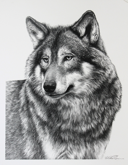 14-Wolf-Portrait-William-Bill-Harrison-Majestic-Wildlife-Carbon-Pencil-Drawings-www-designstack-co