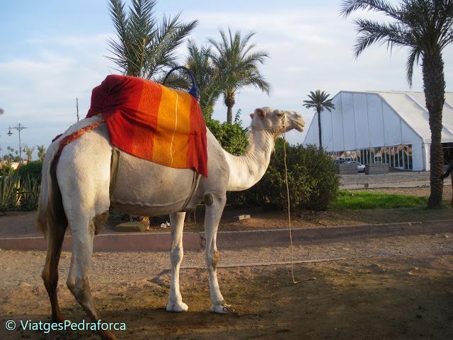 Patrimoni de la Humanitat, Unesco World Heritage, Marroc