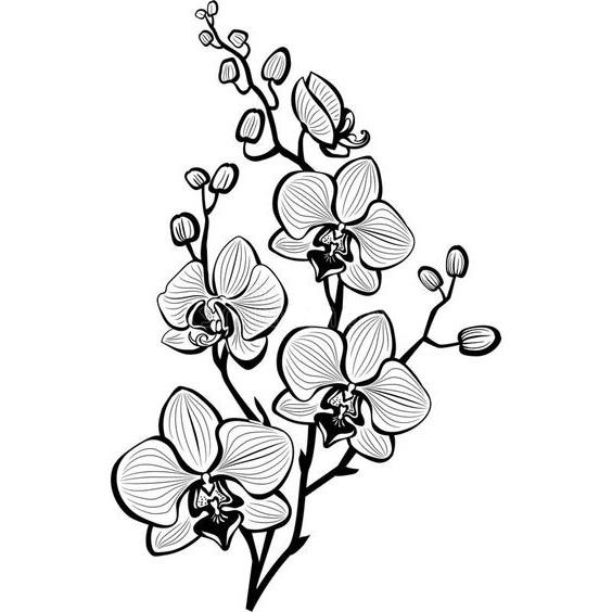 bunga anggrek hita putih