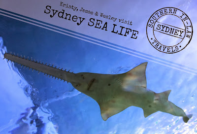 Sydney SEA LIFE Aquarium Review