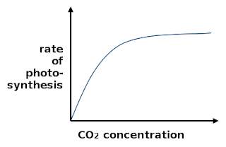 CO2 concentration
