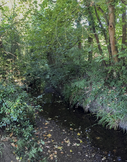 The Kyd Brook.  Walk round the Hawkwood Estate 05, 30 August 2016.