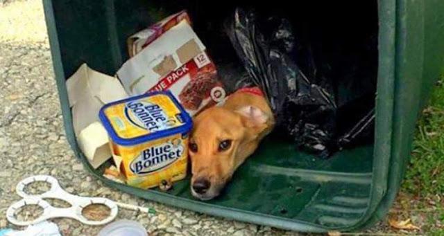 Девушка решила переехать к парню, а собаку просто выбросила…в мусорный бак