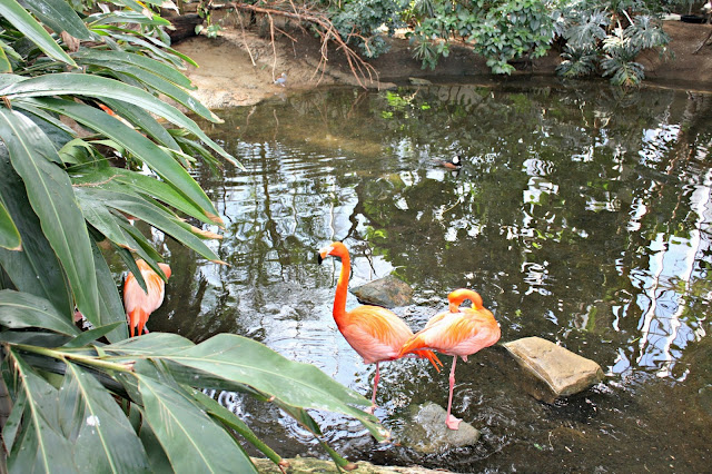 Flamingos resting at the National Aviary in Pittsburgh.