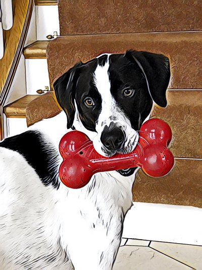 Our dog Luka with his favorite toy, a large red bone