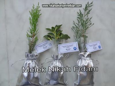 Elif Ozan Nikah Bitkisi İzmir3
