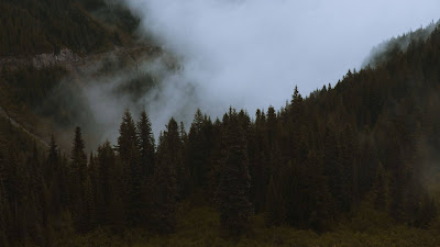 Mountains, pines, trees, fog, road, car, nature