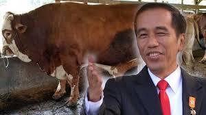 Presiden Jokowi Beli Sapi Kurban Seharga Rp85 Juta Dari Peternak Polewali Mandar Sulawesi Barat