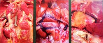 Manfaat CATALYST: Menghilangkan racun di tubuh burung Menetralkan kondisi tubuh burung dari suplemen doping oplosan, suplemen tidak standart dan obat-obatan Menetralkan kondisi burung yang over birahi kembali ke kondisi normal Menjaga kesehatan burung